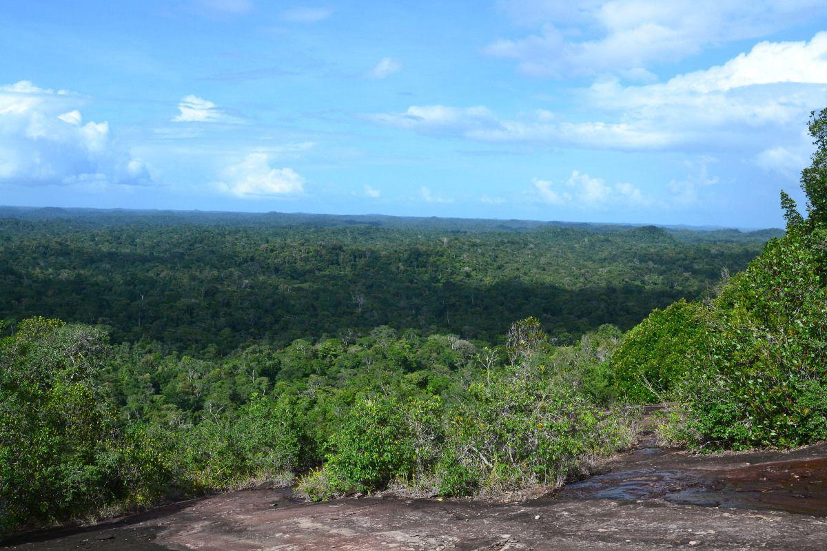 Le deuxième jour on a marché des heures pour voir des brocolis géants depuis l'inselberg
