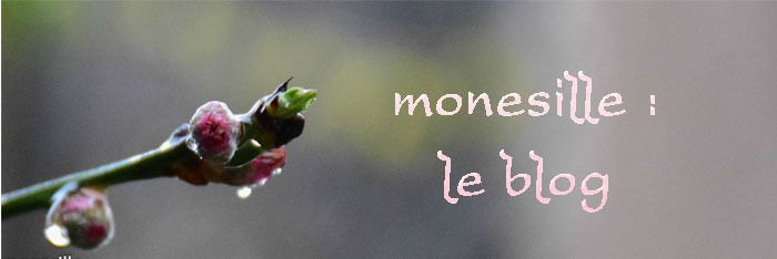 monesille : le blog
