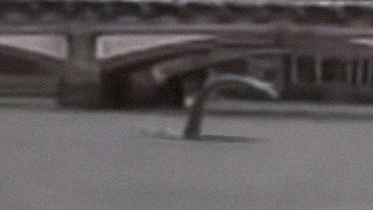 NEW FOOTAGE SHOWING Mysterious Creature swimming in Thames ! March 2016