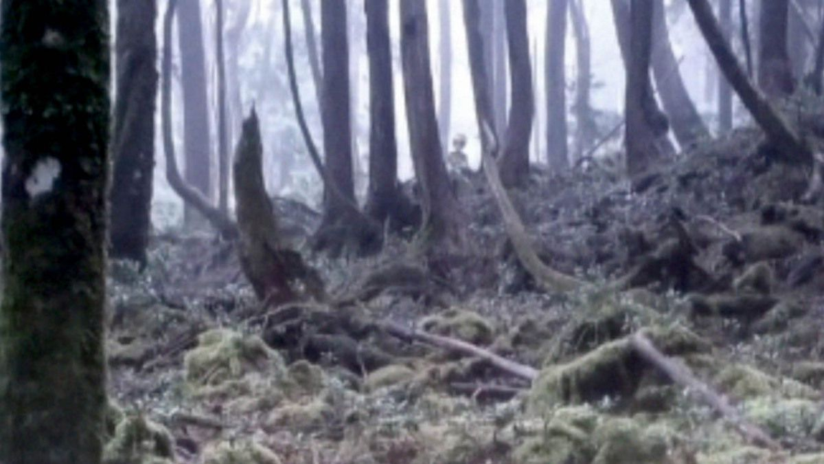UFO - SPACESHIP with ALIENS in Forest filmed by Hikers - Poland !!! May 2016