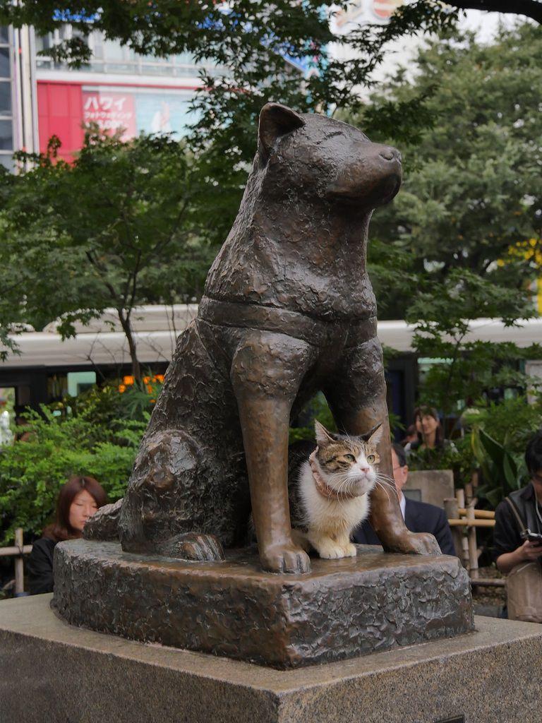 Hachiko ! Le chien qui a attendu son maître, même décédé, tous les jours, au même endroit, pendant des années !On a eu la chance d'y trouver un chat tout kawaii !! <3