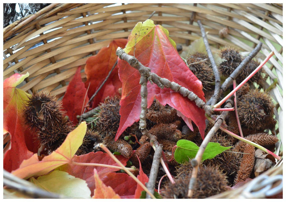 Arts visuels d'automne.Débuter une collection pour créer une oeuvre plastique.