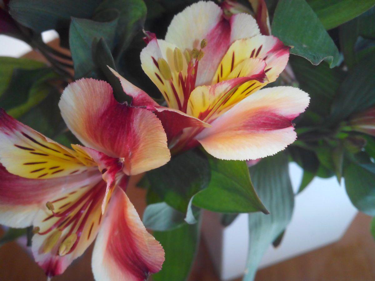 olivier cr ation distribution olivier cr ation et l 39 atelier floral exotique vous proposent. Black Bedroom Furniture Sets. Home Design Ideas