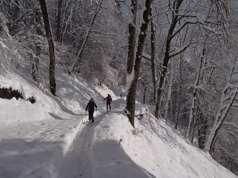 Les avalanches à craindre aujourd'hui viennent des arbres !