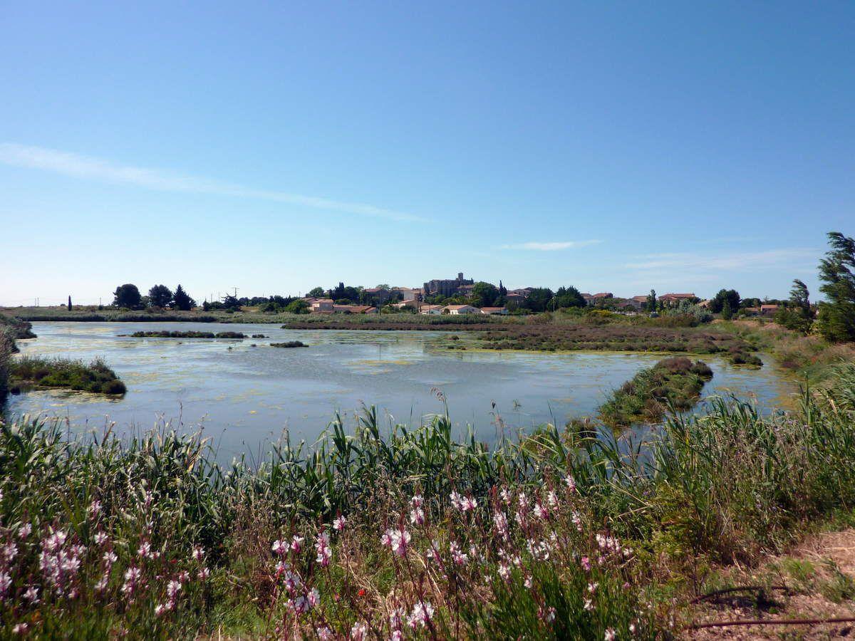 Vic la Gardiole - La campagne, les étangs, et la plage des Aresquiers