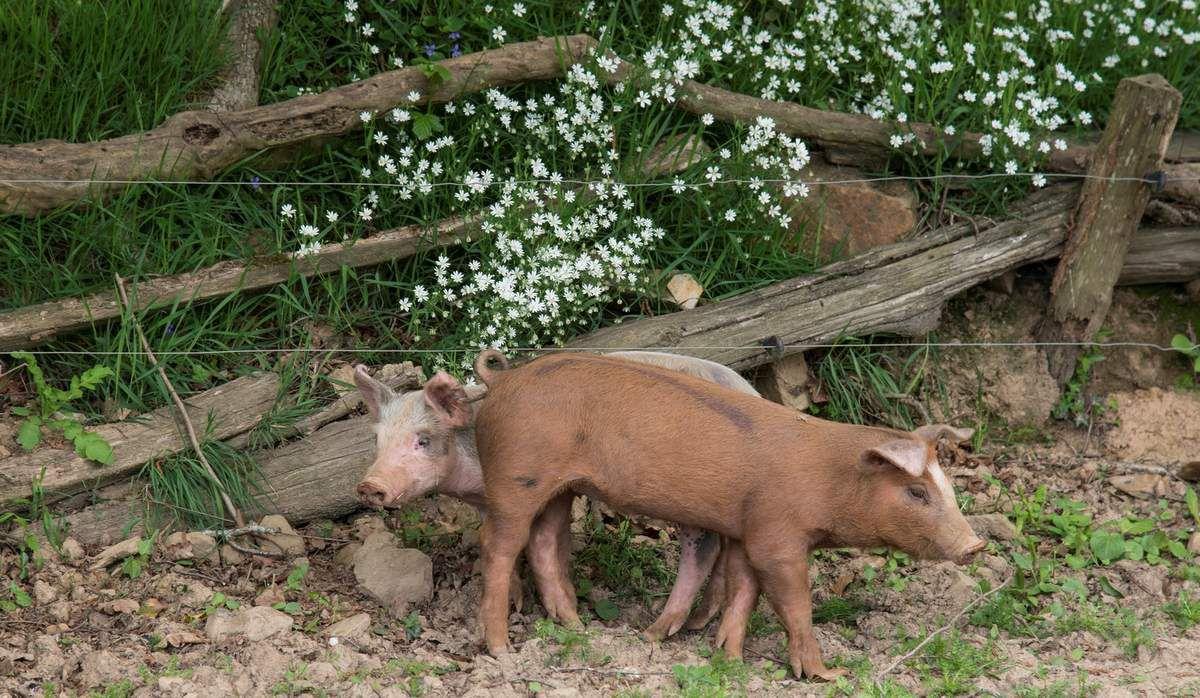 les autres animaux de notre ferme
