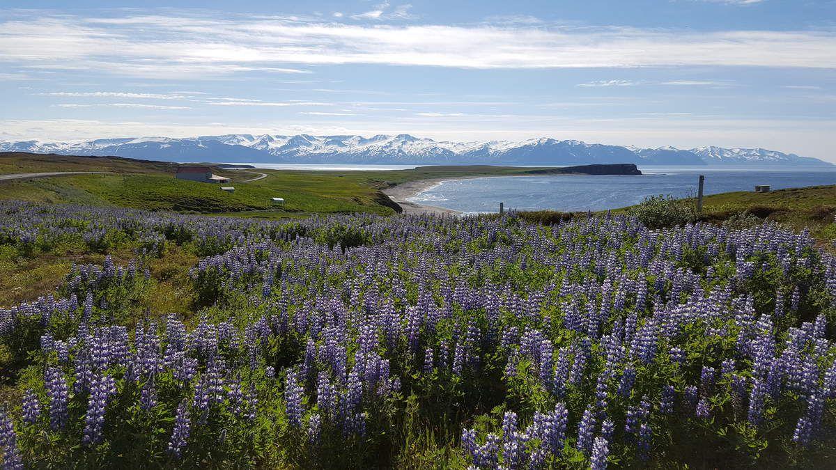 Islande - paysages