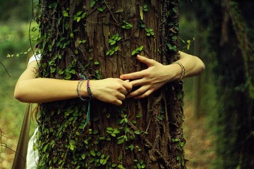 Aimez les arbres