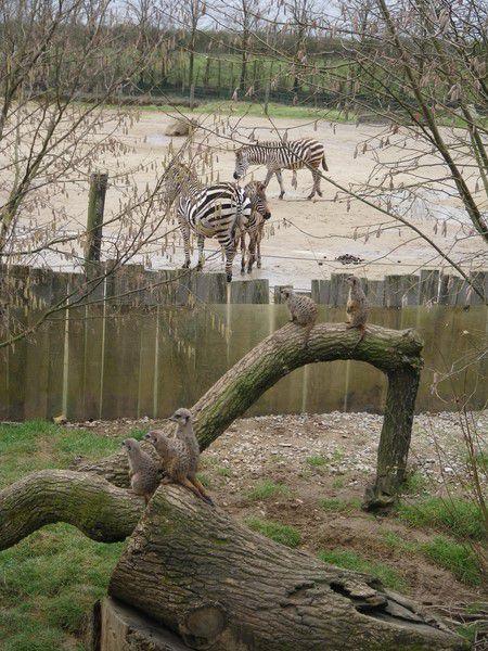 Zoo de la Boissière (1/2)