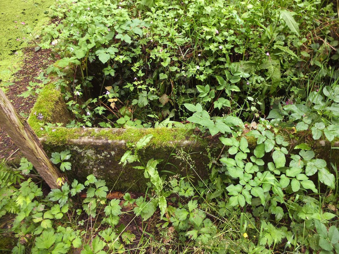 PLESTIN-LES-GREVES : Abreuvoir de Runanbec