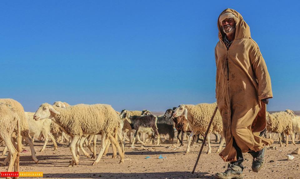 Tarek Plus: le berger.