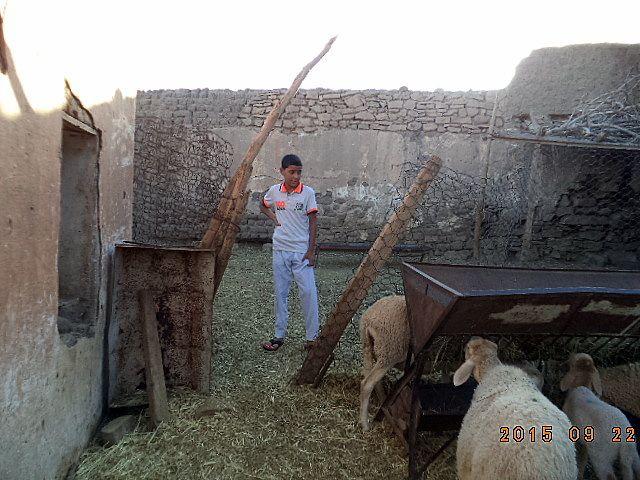 Yacine Hadj Aissa , mon neveu sur les deux premières photos , Benaissa , mon autre neveu sur la troisième