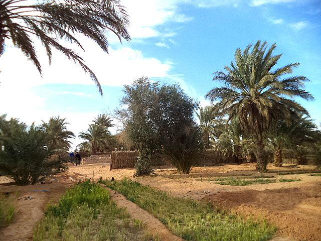 Visite de la propriété de notre ami Atallah