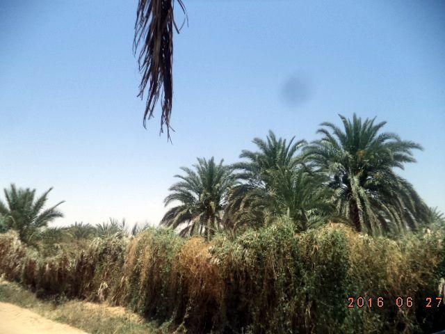 Une petite virée à Sidi Khouiled