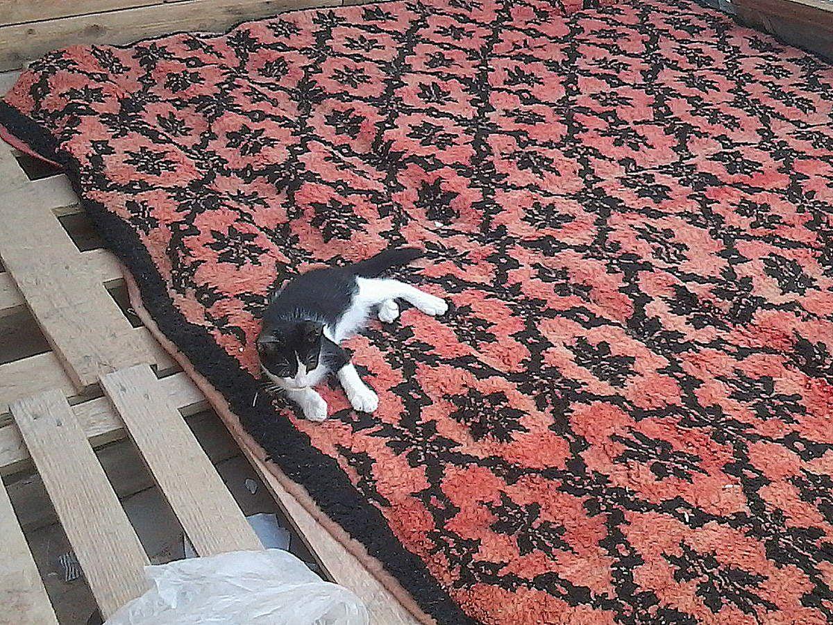 &quot&#x3B;Quand mes yeux, vers ce chat que j'aime...&quot&#x3B;