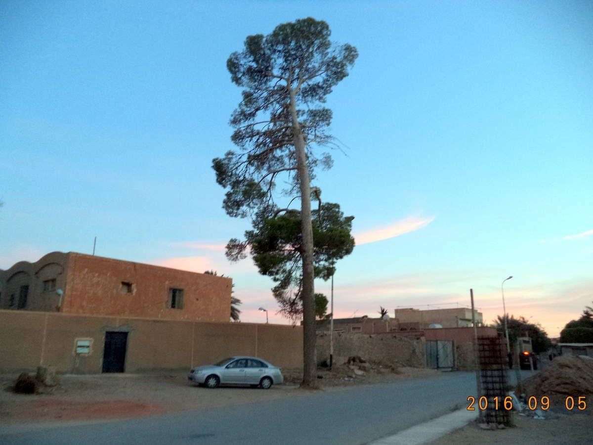 مسجد سيدنا بلال في وقت صلاة المغرب - الجزء الثاني-