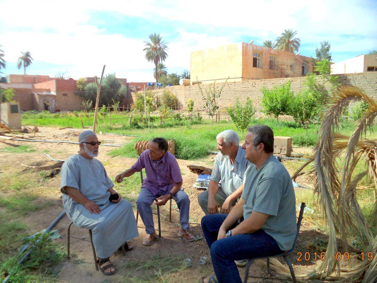 Récolte de dattes chez notre ami Ahmida LAMRI ( 19 9 2016)