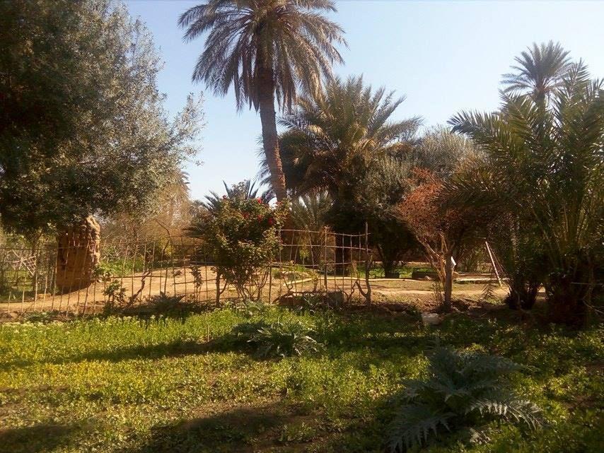 Le jardin de notre ami Mustapha Tadj à l'honneur