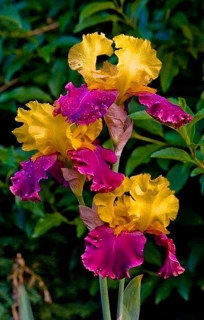 Notre Ami Salim aime , lui aussi, les fleurs .....
