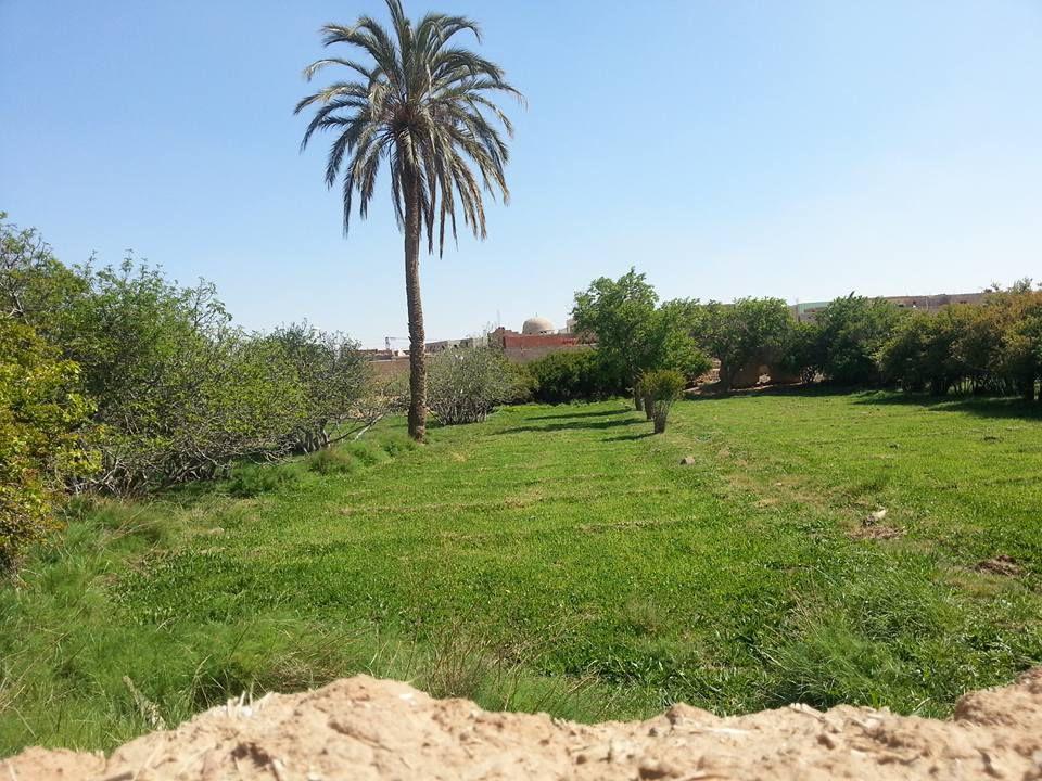 Randonnée matinale dans les jardins de Tadjemout- par Ahmed Lakhdari-