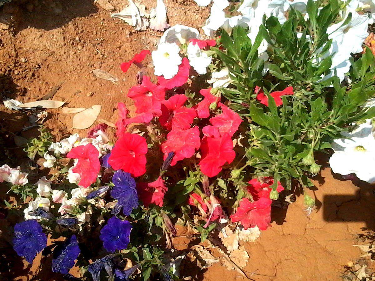 Dialogue avec les fleurs de Tipaza .