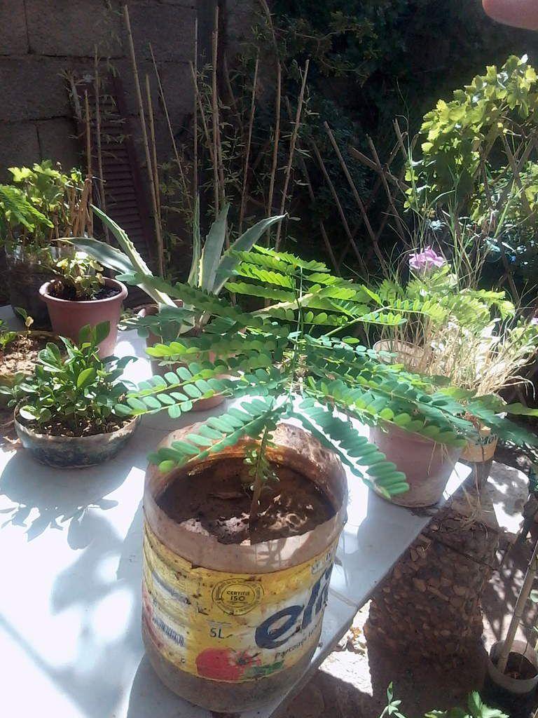 Petite visite d'amitié à Mehdi, &quot&#x3B;l'ami des plantes et des fleurs&quot&#x3B;