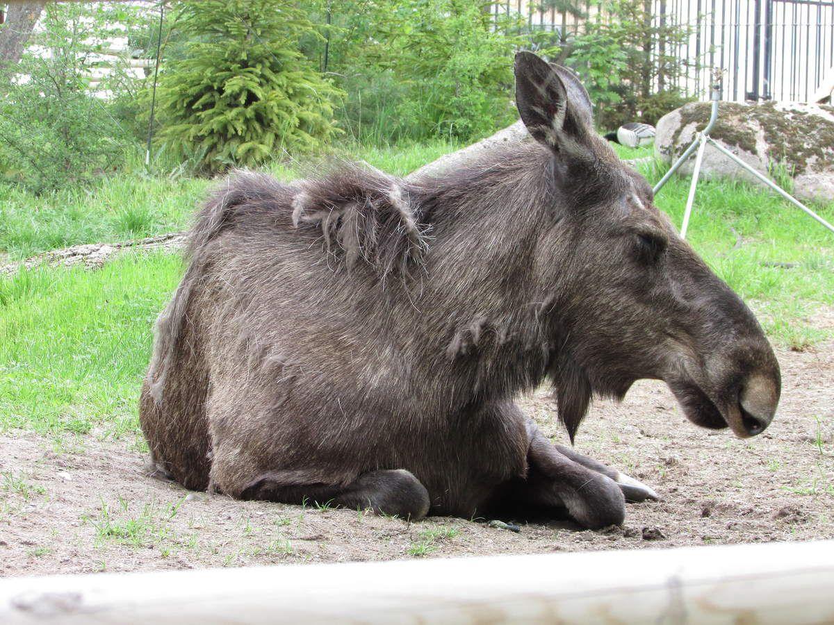Skansen, l'écomusée de Stockholm - Le zoo (1 ère partie)