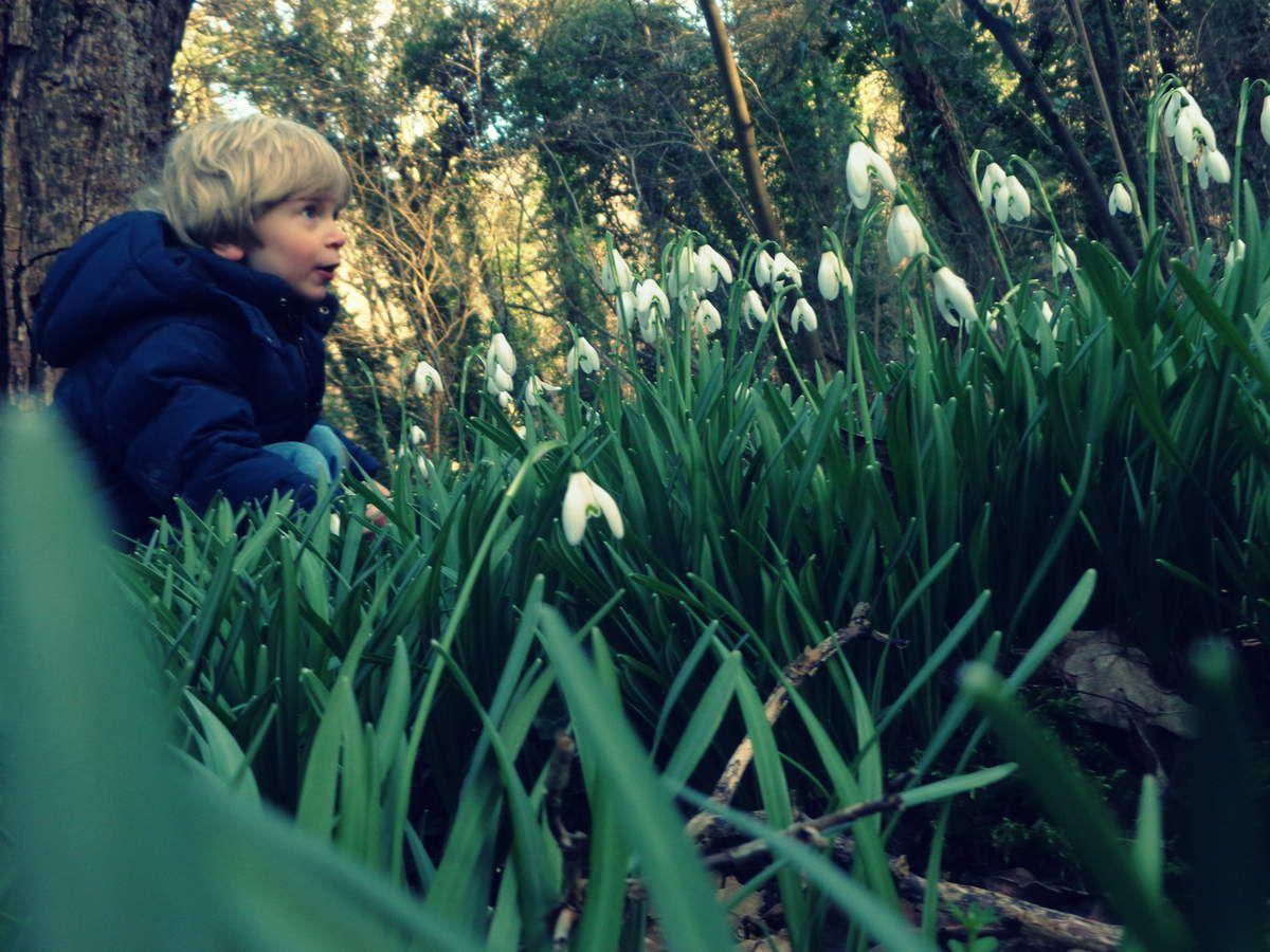 Le printemps sous les arbres