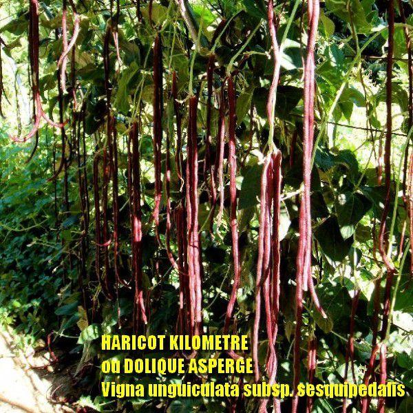TOUS AU POTAGER: vertical, sur botte de paille, semis d'épluchures, mulch, serre, graines exotiques, permaculture...