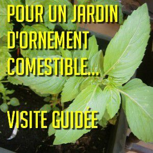 jardins potagers tendance 2015 le jardin d 39 ornement comestible natures paul keirn. Black Bedroom Furniture Sets. Home Design Ideas