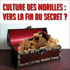 Culture des morilles : le « Kit morilles » en vente sur Amazon pour bientôt ?