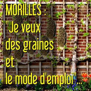 Morilles : &quot&#x3B;je voudrais cultiver des morilles et suis a la recherche de semences avec le mode d'emploi &quot&#x3B;