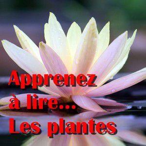 Formation gratuite à la Botanique par Tela Botanica : « apprendre à connaître les plantes » - initiation.