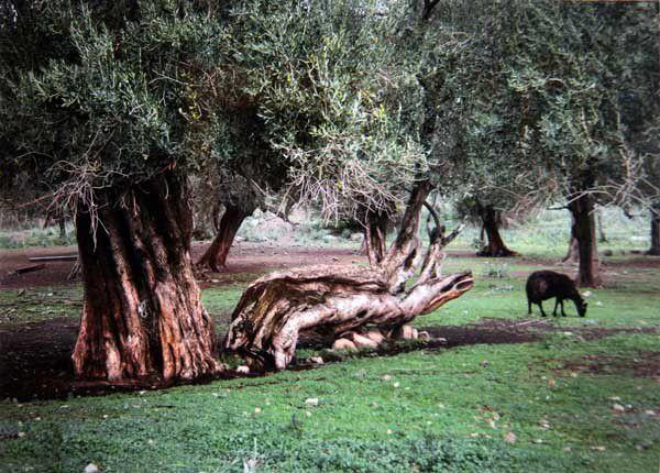 Lesbos 19 : Agia Paraskevi, musée de l'olive. Mercredi 18 juin 2014