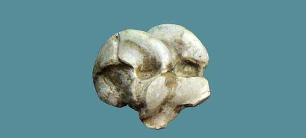 Samos 09 : le musée paléontologique. Dimanche 31 août 2014
