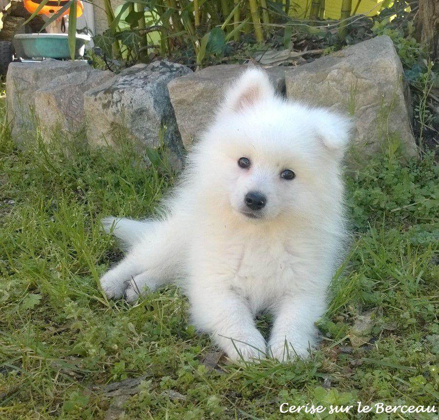 Maman, on peut avoir un chien ?
