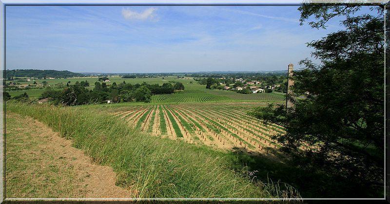 Quel magnifique panorama sur les vignes