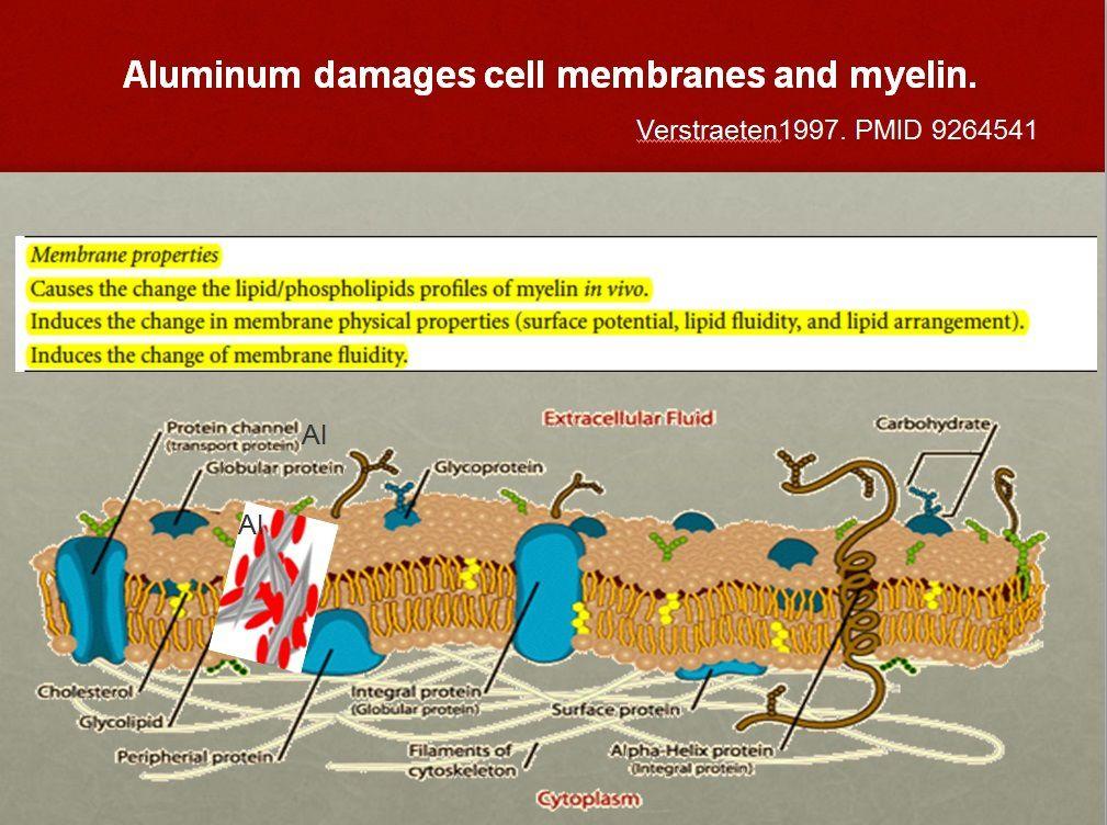 L'aluminium est toxique pour toutes les formes de vie: pourquoi est-il utilisé dans les vaccins?