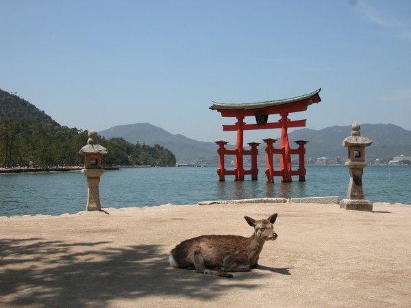 Miyajima, l'île sacrée aux daims en liberté
