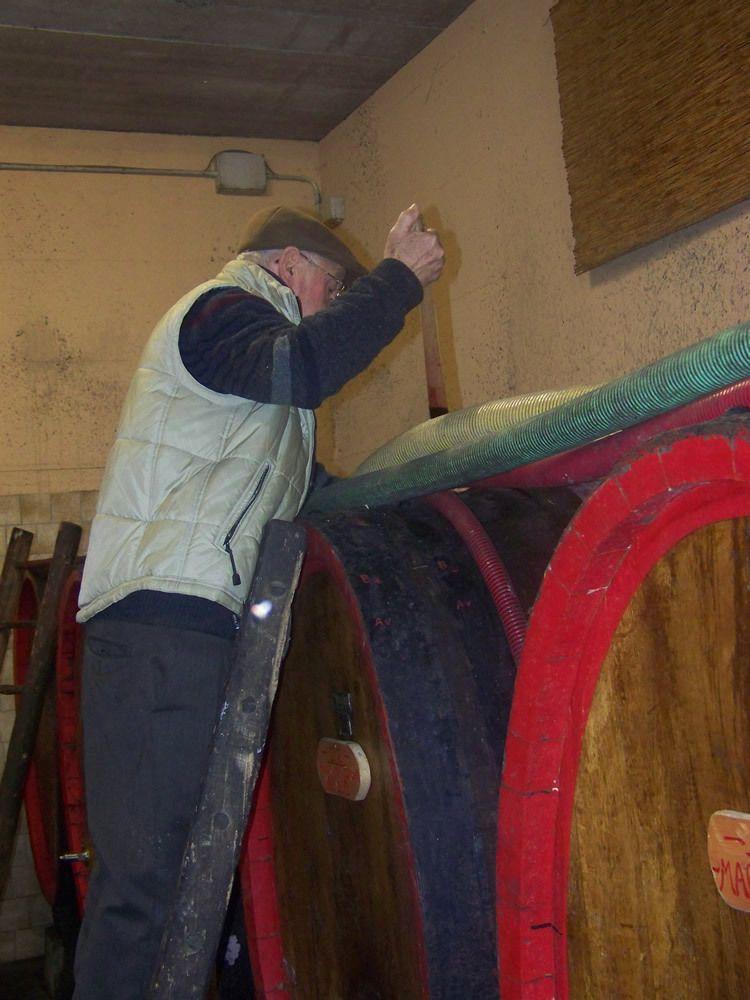 Le droit d'aînesse du Barbacarlo vin « unique » du Commendatore Lino Maga à Broni province de Pavie…« un grande vino contadino »