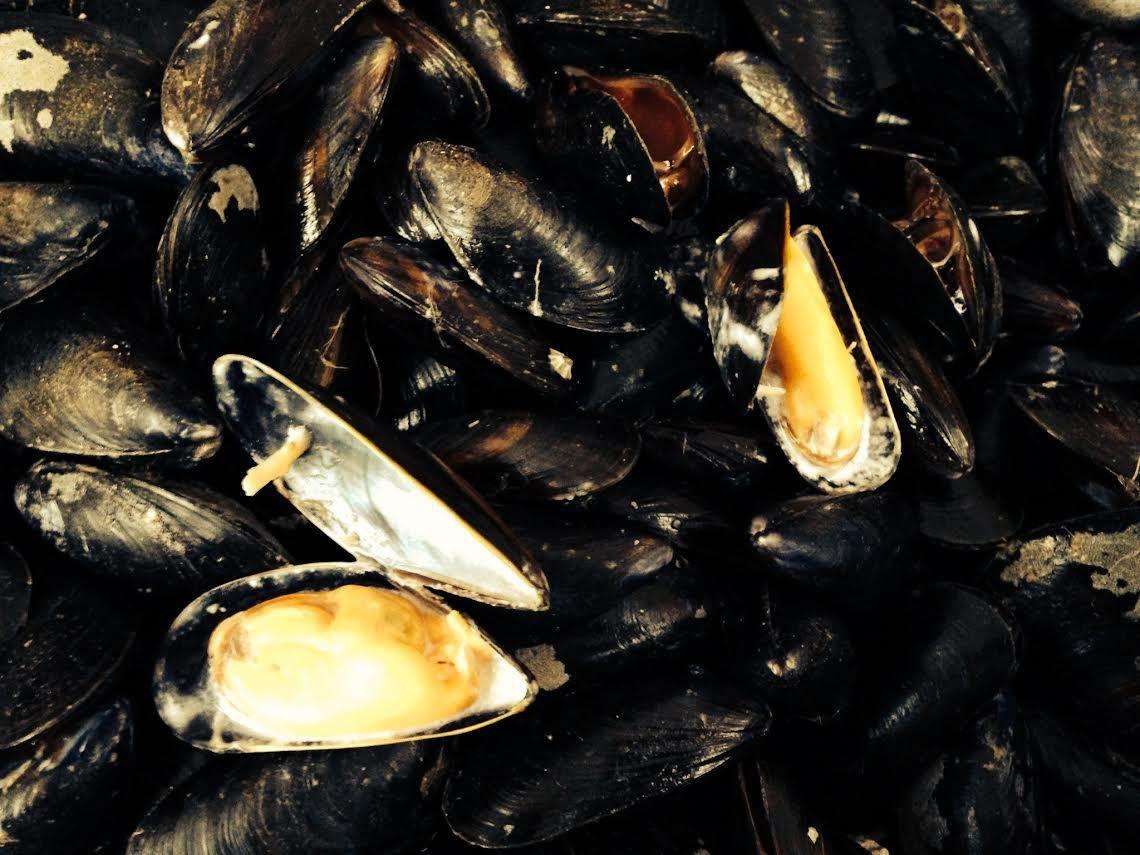 « Nos coquillages auront-ils la pêche dans 20 ans ? » au 1er SEAFOOD FUSION FESTIVAL de Brest