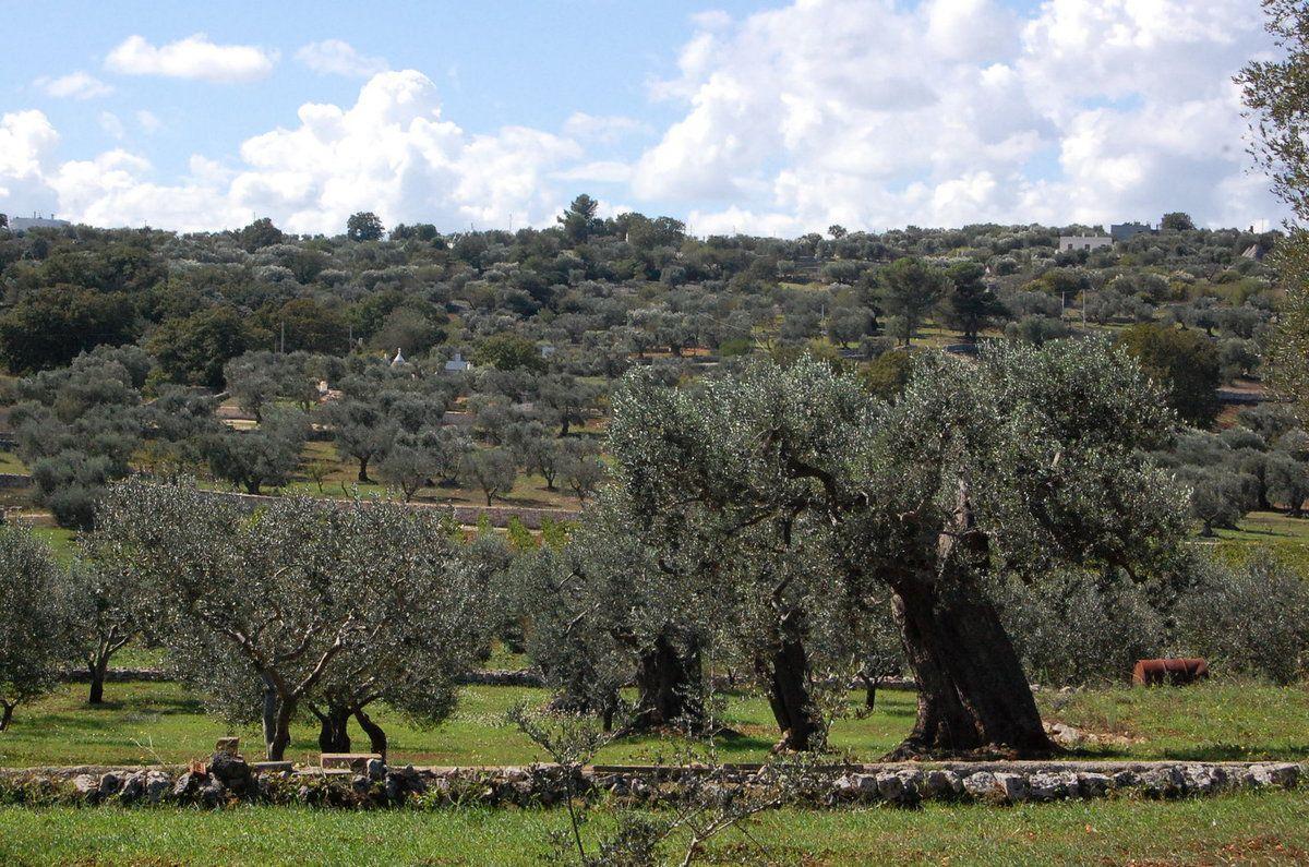 Italie - Pouilles - Valle D'Itria