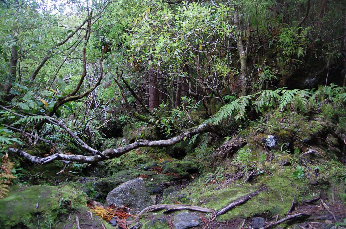 Reserva Florestal de Recreio da Serreta