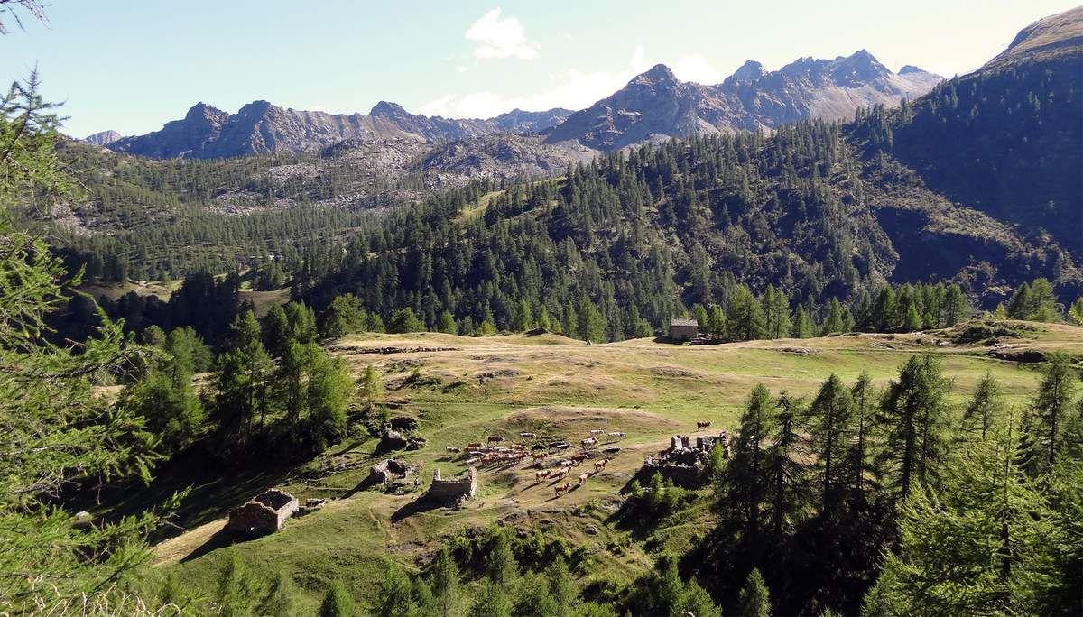 Retour à l'alpage Dondena