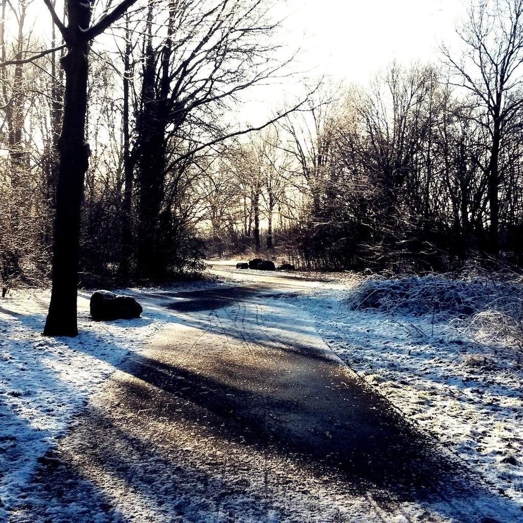Petit chemin argenté