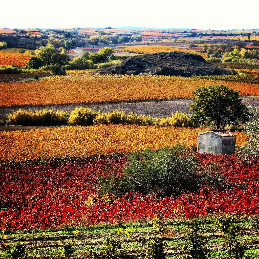 Un automne dans les vignes