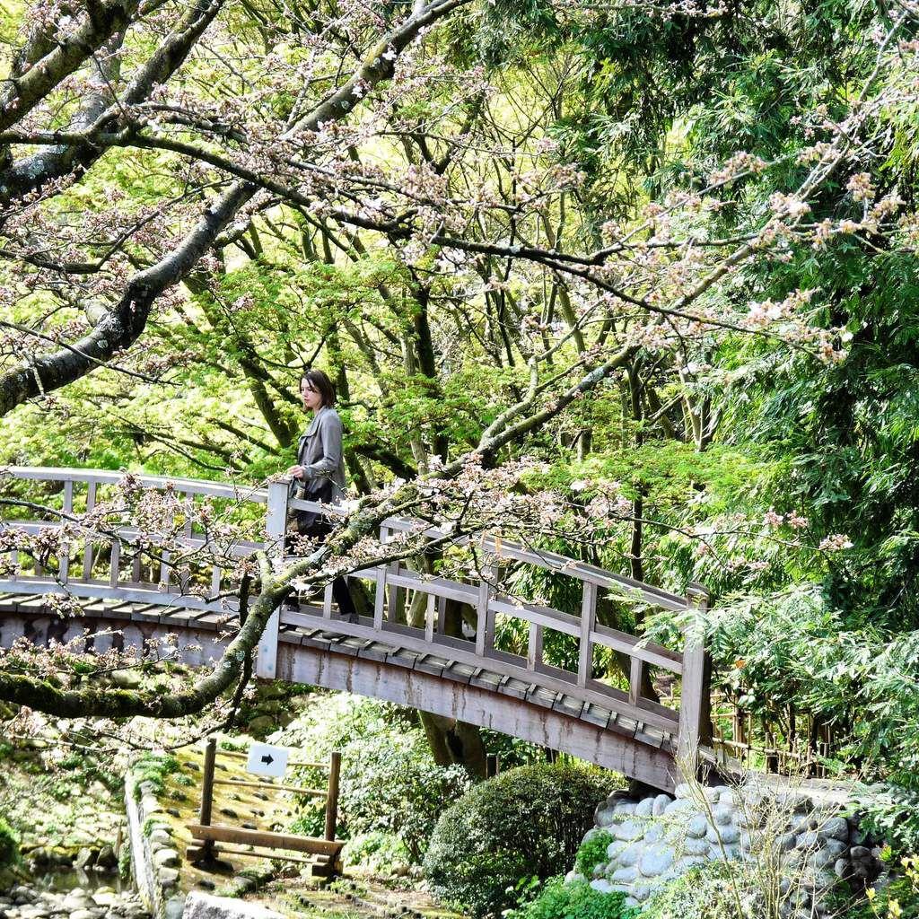 Dans les jardins d'Albert Kahn