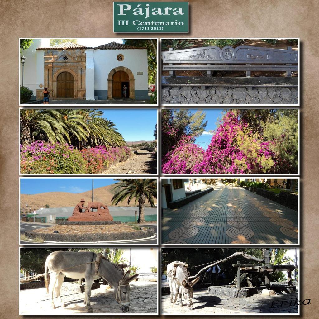 Les moulins, Pajara, les écureuils, Betancuria et les statues en bronze d'Ayose et Guize, Phare de Toston à El Cotillo...