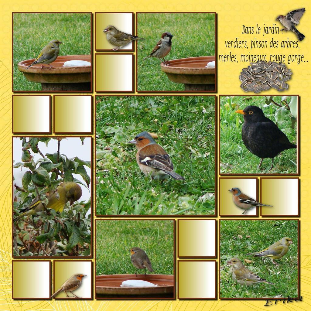 Les oiseaux du jardin...