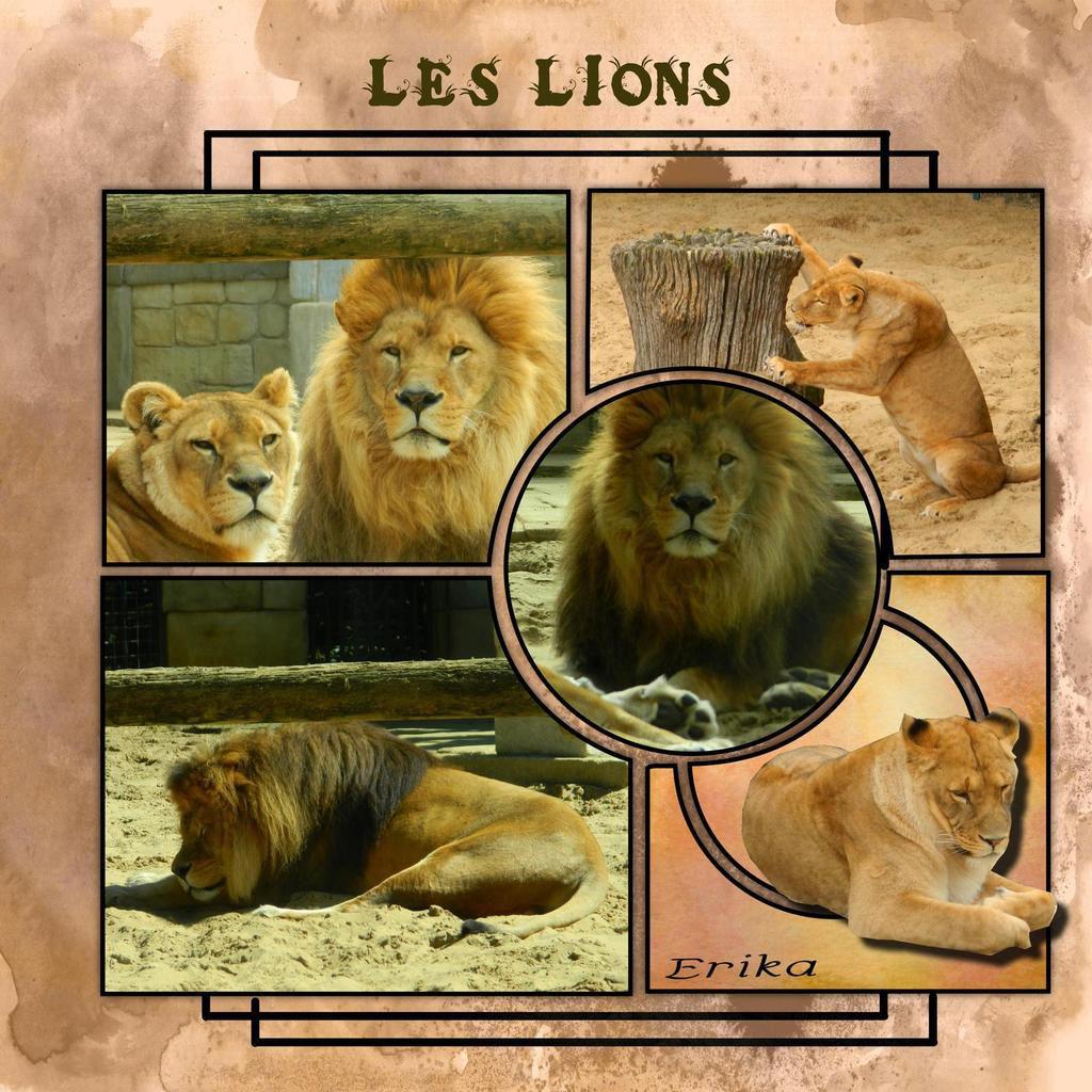 Les lions, le paon et les aras...